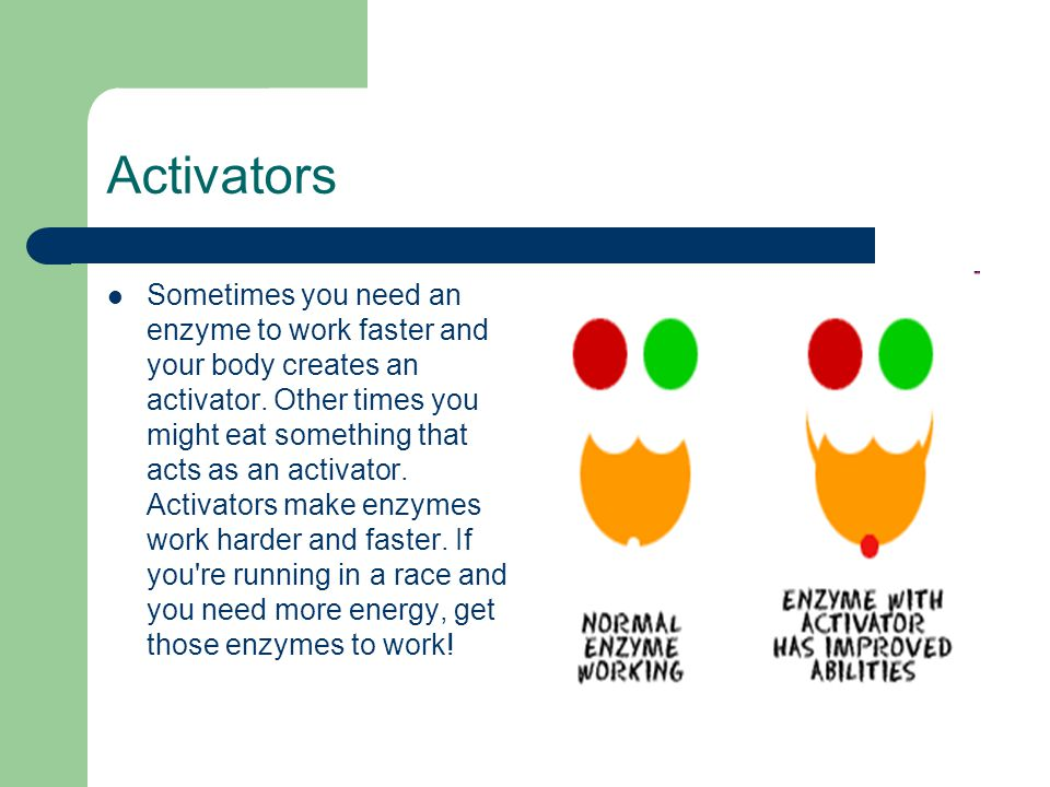 Activators Sometimes you need an enzyme to work faster and your body creates an activator.