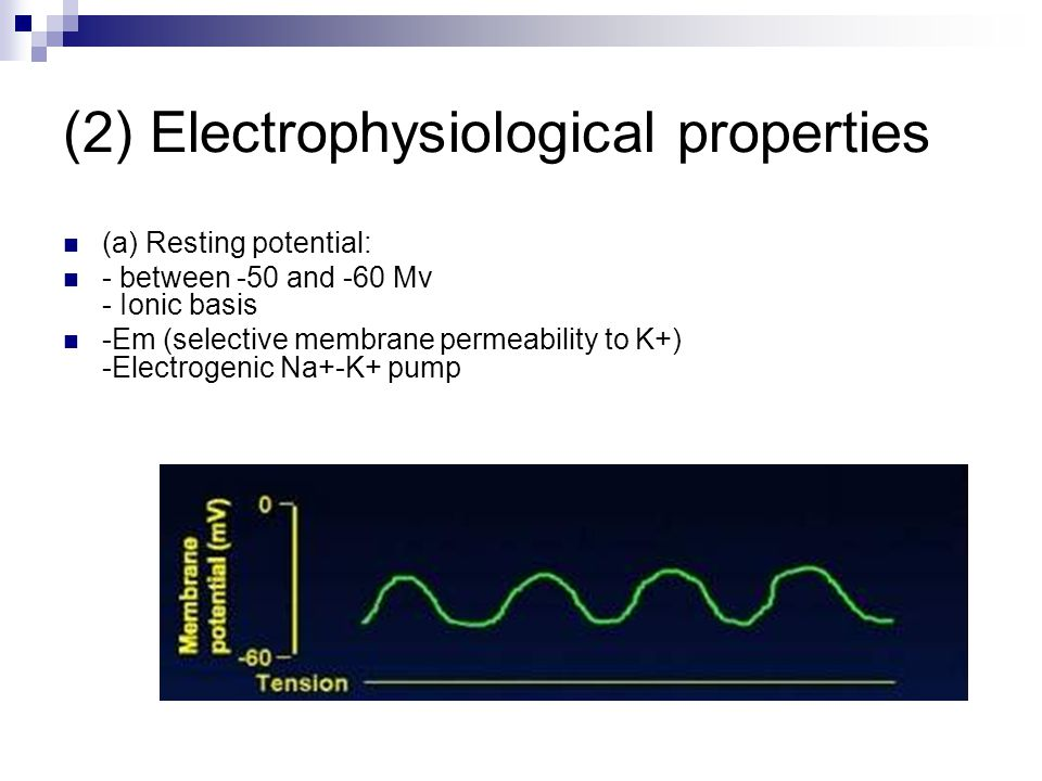(2) Electrophysiological properties (a) Resting potential: - between -50 and -60 Mv - Ionic basis -Em (selective membrane permeability to K+) -Electrogenic Na+-K+ pump
