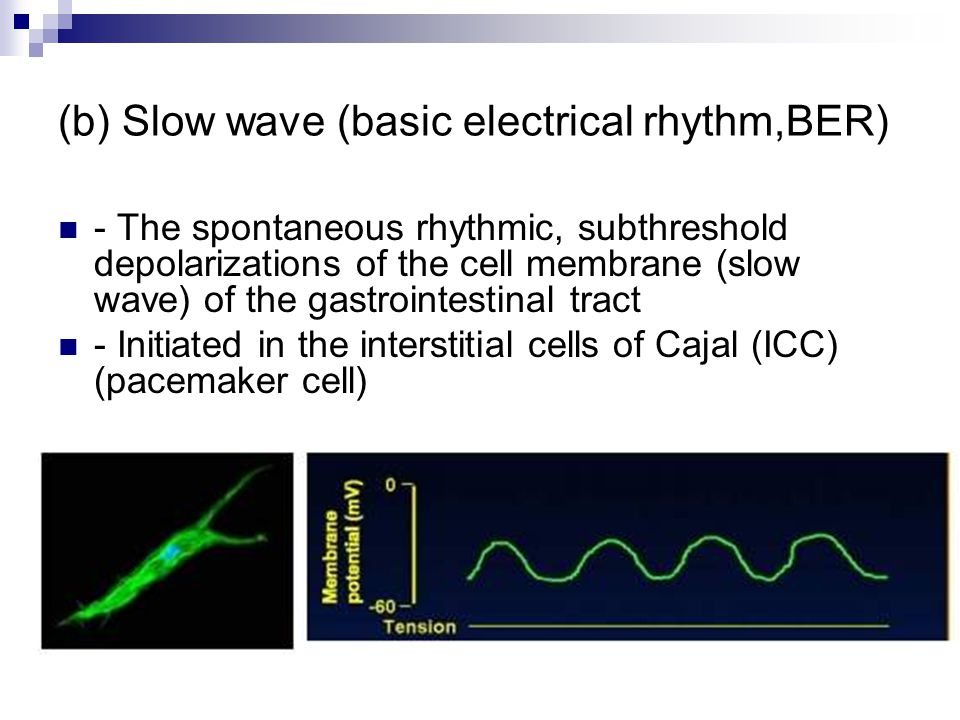 (b) Slow wave (basic electrical rhythm,BER) - The spontaneous rhythmic, subthreshold depolarizations of the cell membrane (slow wave) of the gastrointestinal tract - Initiated in the interstitial cells of Cajal (ICC) (pacemaker cell)