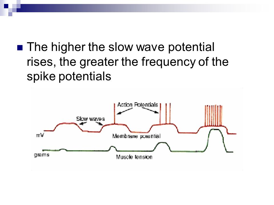 The higher the slow wave potential rises, the greater the frequency of the spike potentials