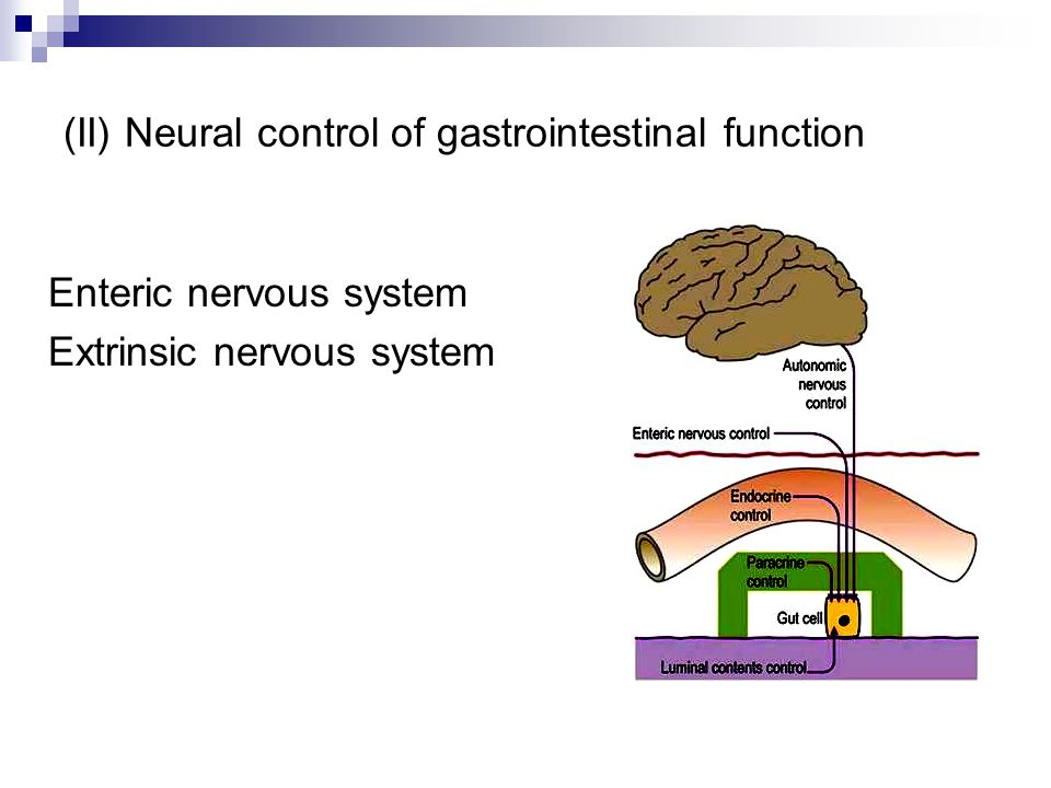 (II) Neural control of gastrointestinal function Enteric nervous system Extrinsic nervous system