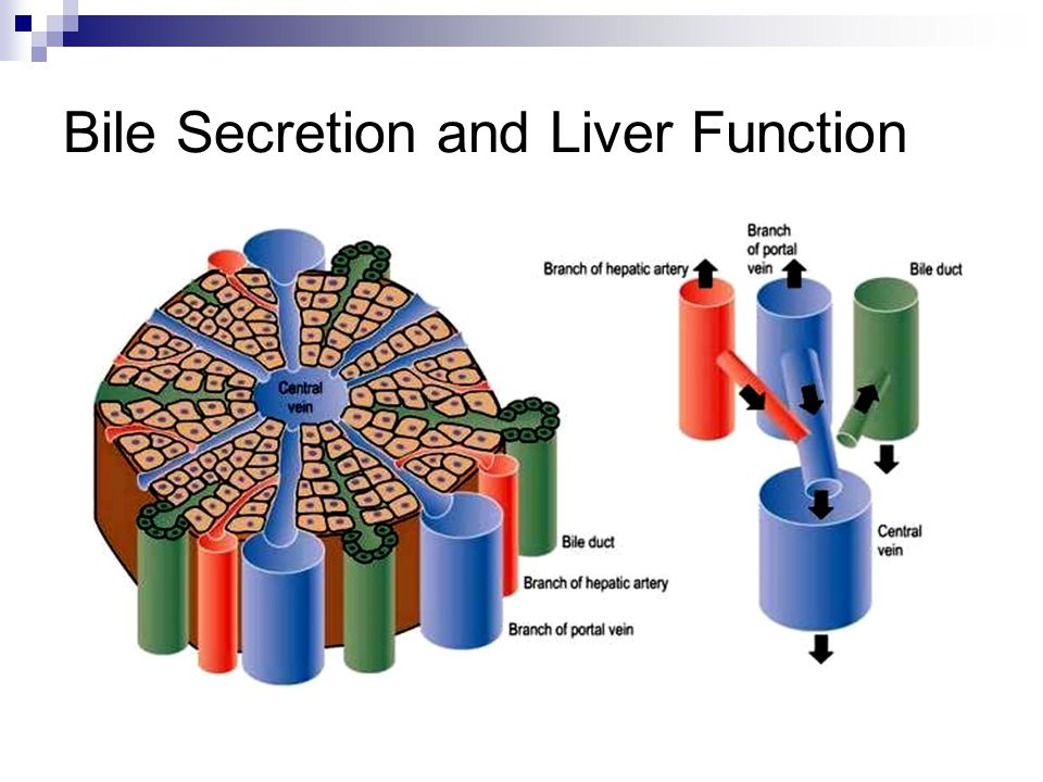 Bile Secretion and Liver Function