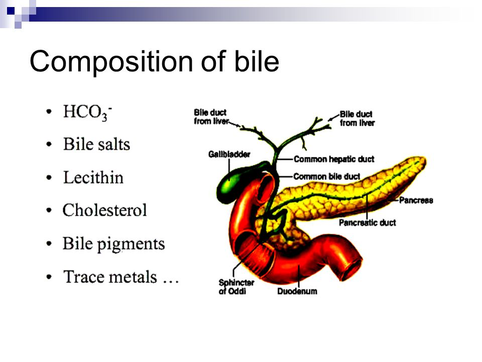 Composition of bile