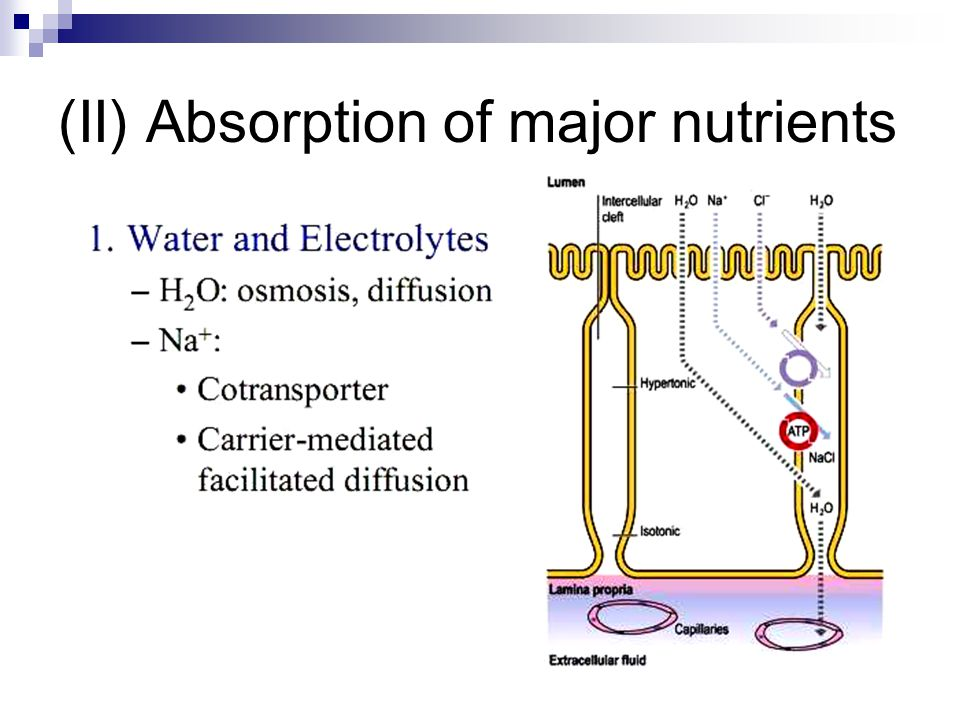 (II) Absorption of major nutrients