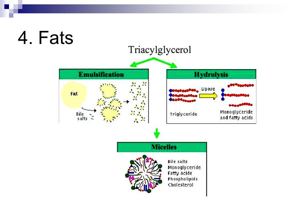 4. Fats