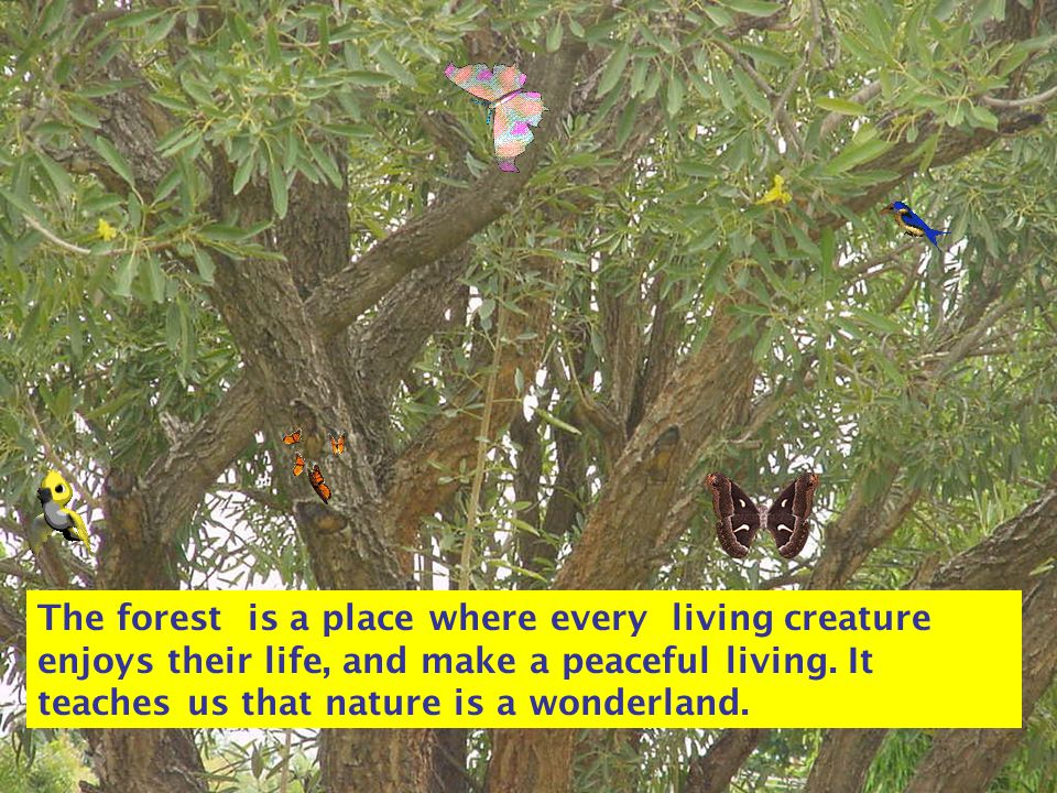 The forest is a place where every living creature enjoys their life, and make a peaceful living.