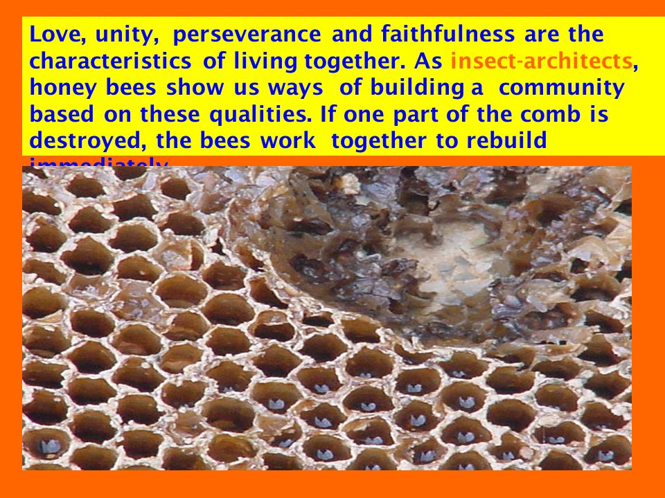 Love, unity, perseverance and faithfulness are the characteristics of living together.