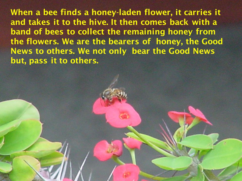 When a bee finds a honey-laden flower, it carries it and takes it to the hive.