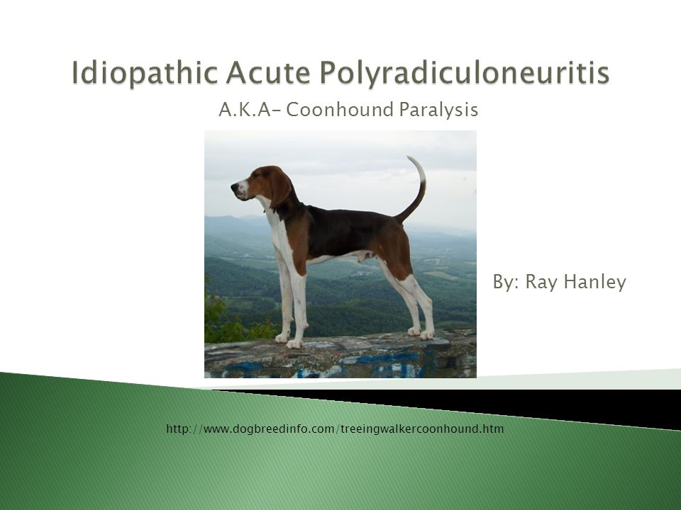  Canine neurological disorder caused by exposure to certain contaminants from small animals ◦ Feces, saliva, urine & blood  Acute neurologic disorder affecting certain canine nerves for controlling: ◦ Fore and hind limbs ◦ Neck muscles ◦ Breathing and barking muscles