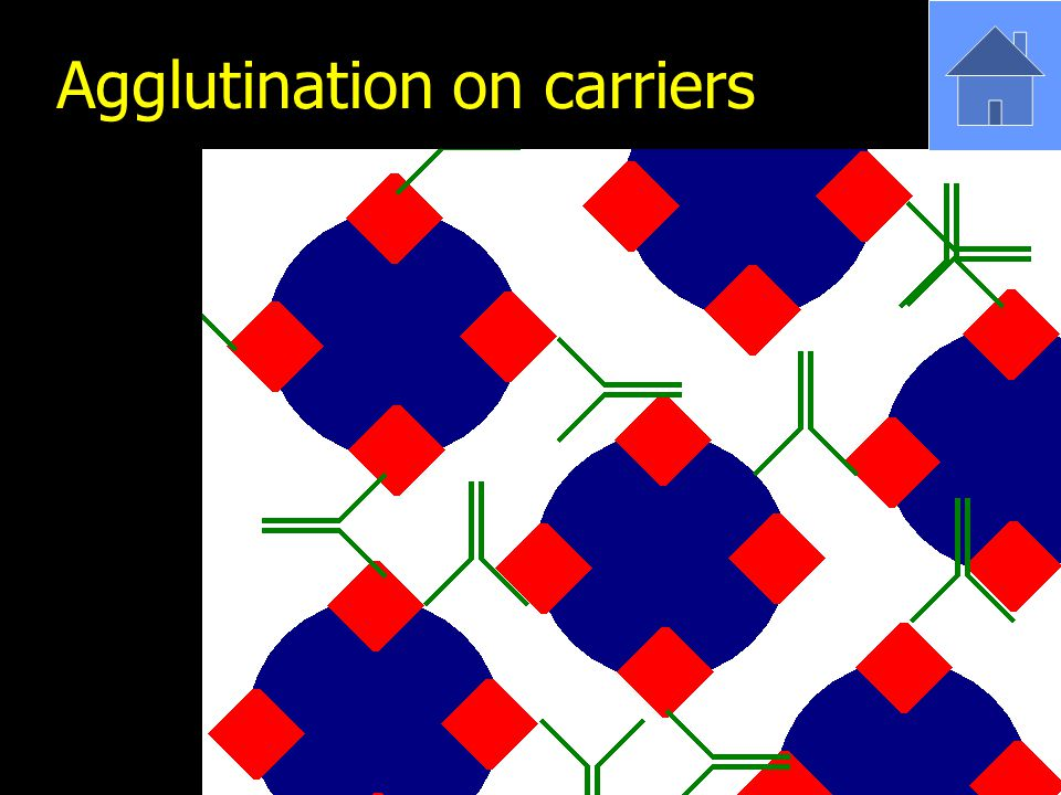 Agglutination on carriers