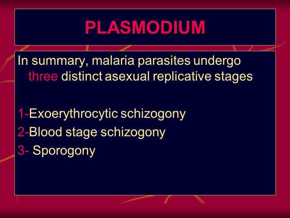 PLASMODIUM In summary, malaria parasites undergo three distinct asexual replicative stages 1-Exoerythrocytic schizogony 2-Blood stage schizogony 3- Sp
