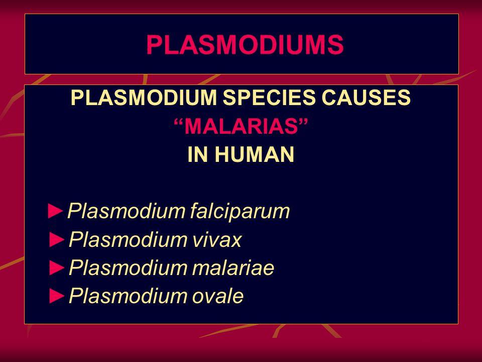 """The Malarias: PLASMODIUMS Plasmodium falciparum Plasmodium vivax Plasmodium malariae Plasmodium ovale PLASMODIUM SPECIES CAUSES """"MALARIAS"""" IN HUMAN ►"""