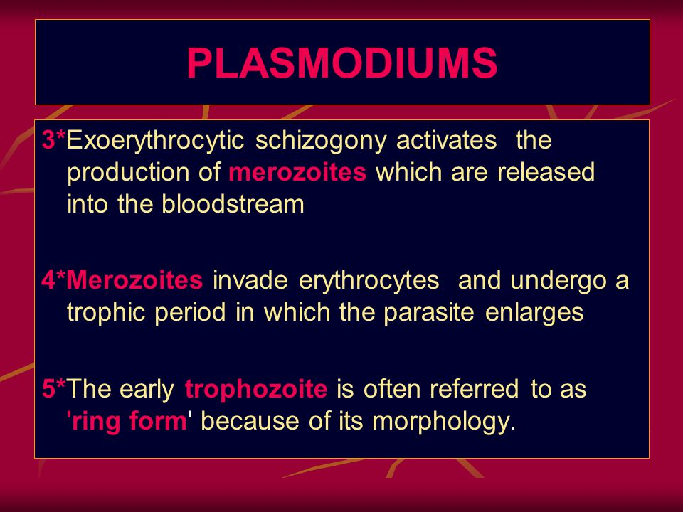 PLASMODIUMS 3*Exoerythrocytic schizogony activates the production of merozoites which are released into the bloodstream 4*Merozoites invade erythrocytes and undergo a trophic period in which the parasite enlarges 5*The early trophozoite is often referred to as ring form because of its morphology.
