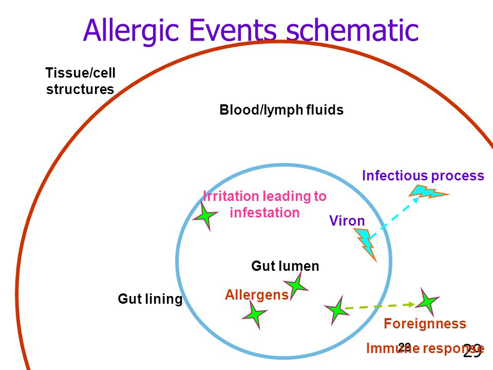 29 Allergic Events schematic Blood/lymph fluids Tissue/cell structures Gut lining Gut lumen Allergens Foreignness Immune response Viron Infectious process Irritation leading to infestation