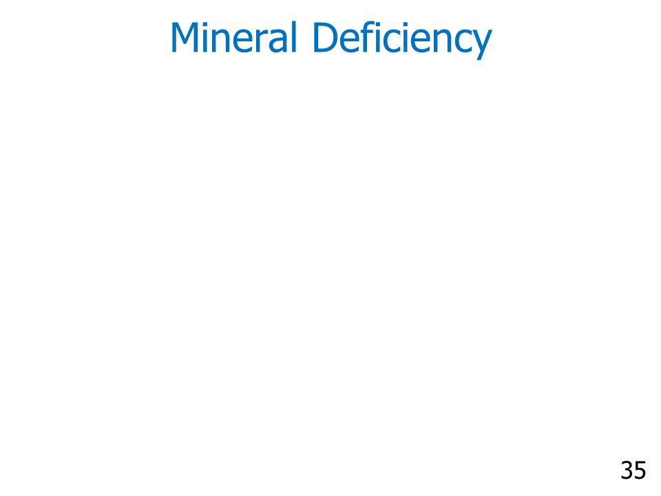 35 Mineral Deficiency