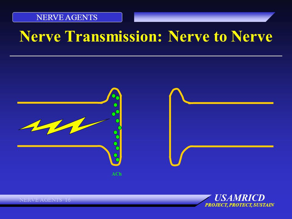 NERVE AGENTS USAMRICD PROJECT, PROTECT, SUSTAIN NERVE AGENTS 16 Nerve Transmission: Nerve to Nerve ACh