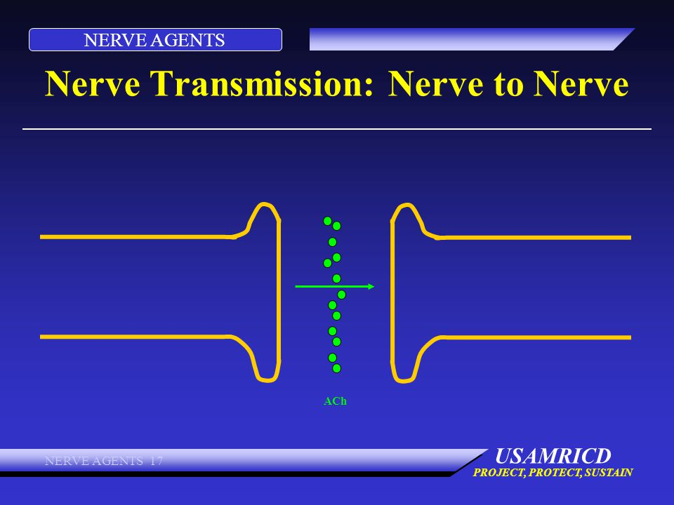 NERVE AGENTS USAMRICD PROJECT, PROTECT, SUSTAIN NERVE AGENTS 17 Nerve Transmission: Nerve to Nerve ACh