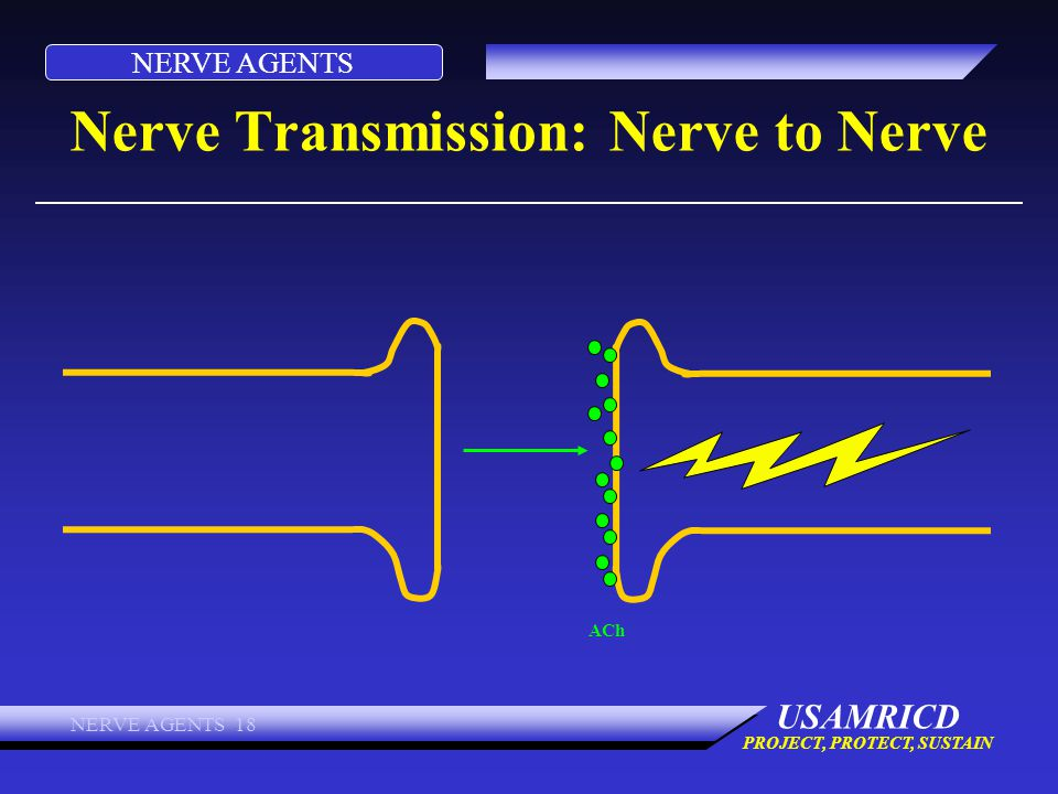 NERVE AGENTS USAMRICD PROJECT, PROTECT, SUSTAIN NERVE AGENTS 18 Nerve Transmission: Nerve to Nerve ACh