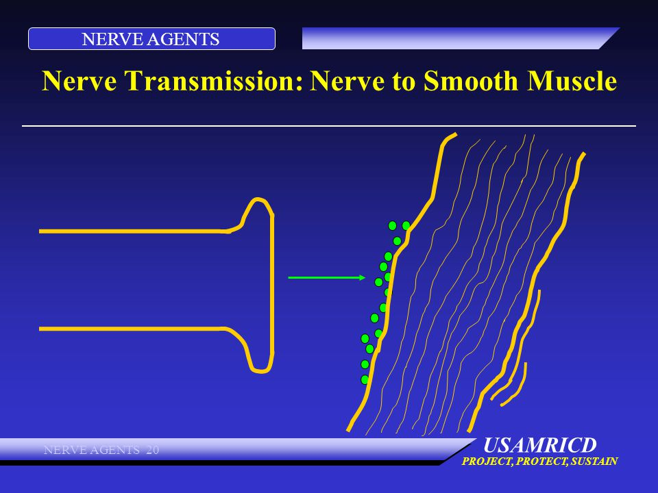 NERVE AGENTS USAMRICD PROJECT, PROTECT, SUSTAIN NERVE AGENTS 20 Nerve Transmission: Nerve to Smooth Muscle
