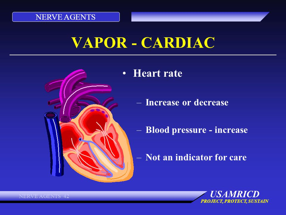 NERVE AGENTS USAMRICD PROJECT, PROTECT, SUSTAIN NERVE AGENTS 42 VAPOR - CARDIAC Heart rate –Increase or decrease –Blood pressure - increase –Not an in