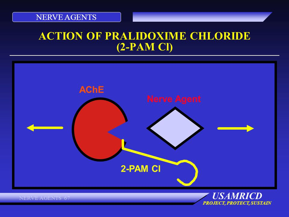 NERVE AGENTS USAMRICD PROJECT, PROTECT, SUSTAIN NERVE AGENTS 67 ACTION OF PRALIDOXIME CHLORIDE (2-PAM Cl) AChE 2-PAM Cl Nerve Agent