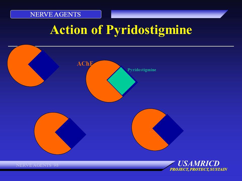 NERVE AGENTS USAMRICD PROJECT, PROTECT, SUSTAIN NERVE AGENTS 98 Action of Pyridostigmine AChE Pyridostigmine