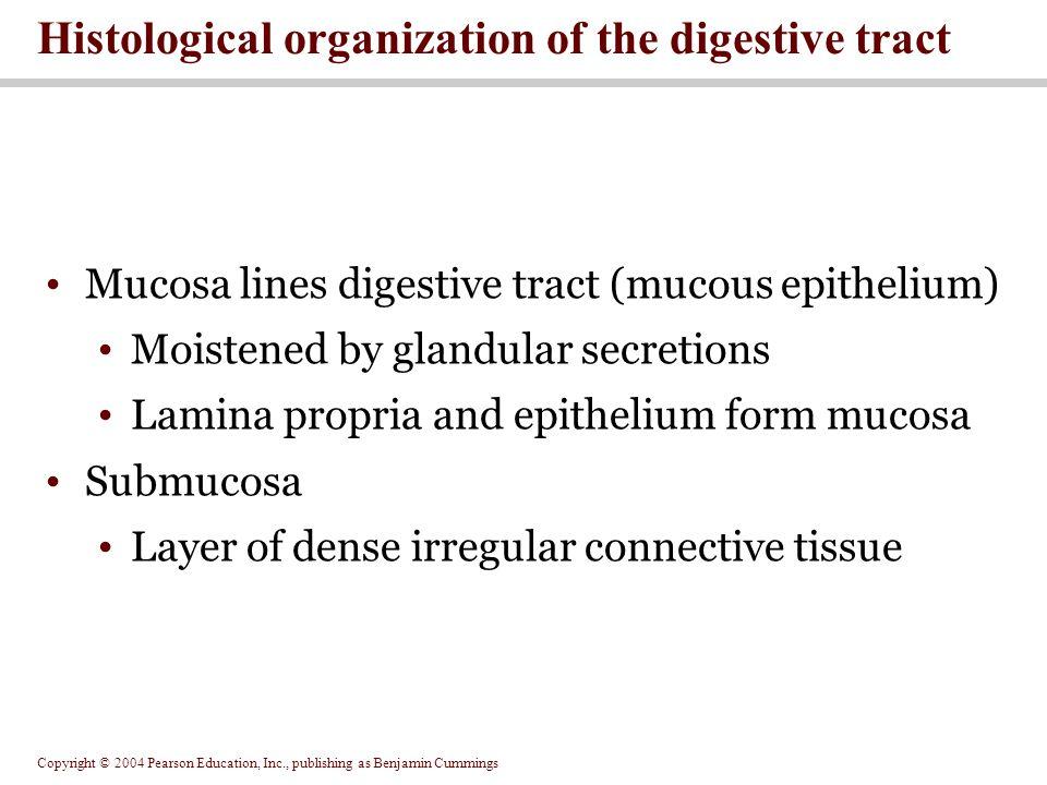 Copyright © 2004 Pearson Education, Inc., publishing as Benjamin Cummings Mucosa lines digestive tract (mucous epithelium) Moistened by glandular secr