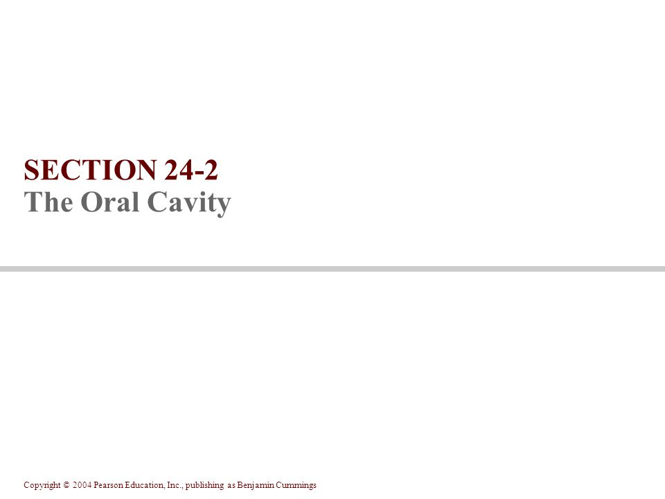 Copyright © 2004 Pearson Education, Inc., publishing as Benjamin Cummings SECTION 24-2 The Oral Cavity