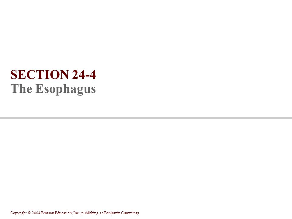 Copyright © 2004 Pearson Education, Inc., publishing as Benjamin Cummings SECTION 24-4 The Esophagus