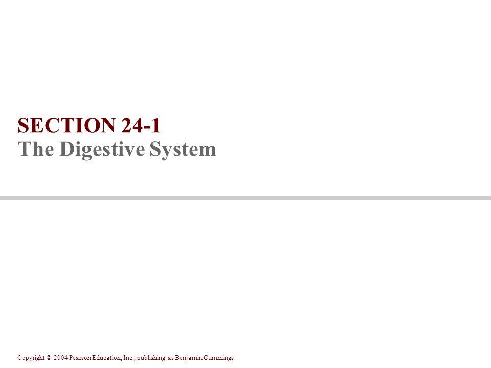 Copyright © 2004 Pearson Education, Inc., publishing as Benjamin Cummings Figure 24.18a-c Figure 24.18 The Pancreas