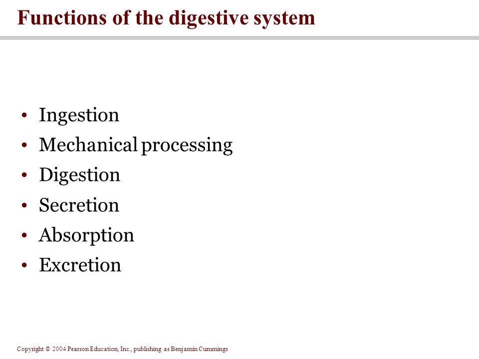 Copyright © 2004 Pearson Education, Inc., publishing as Benjamin Cummings Ingestion Mechanical processing Digestion Secretion Absorption Excretion Fun