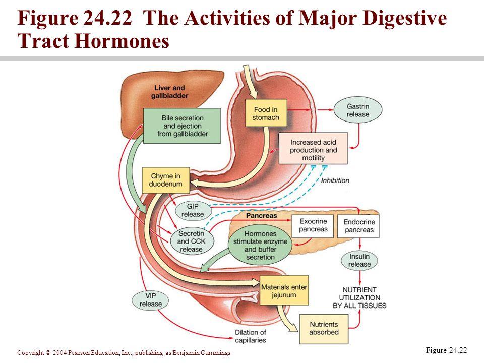 Copyright © 2004 Pearson Education, Inc., publishing as Benjamin Cummings Figure 24.22 The Activities of Major Digestive Tract Hormones Figure 24.22