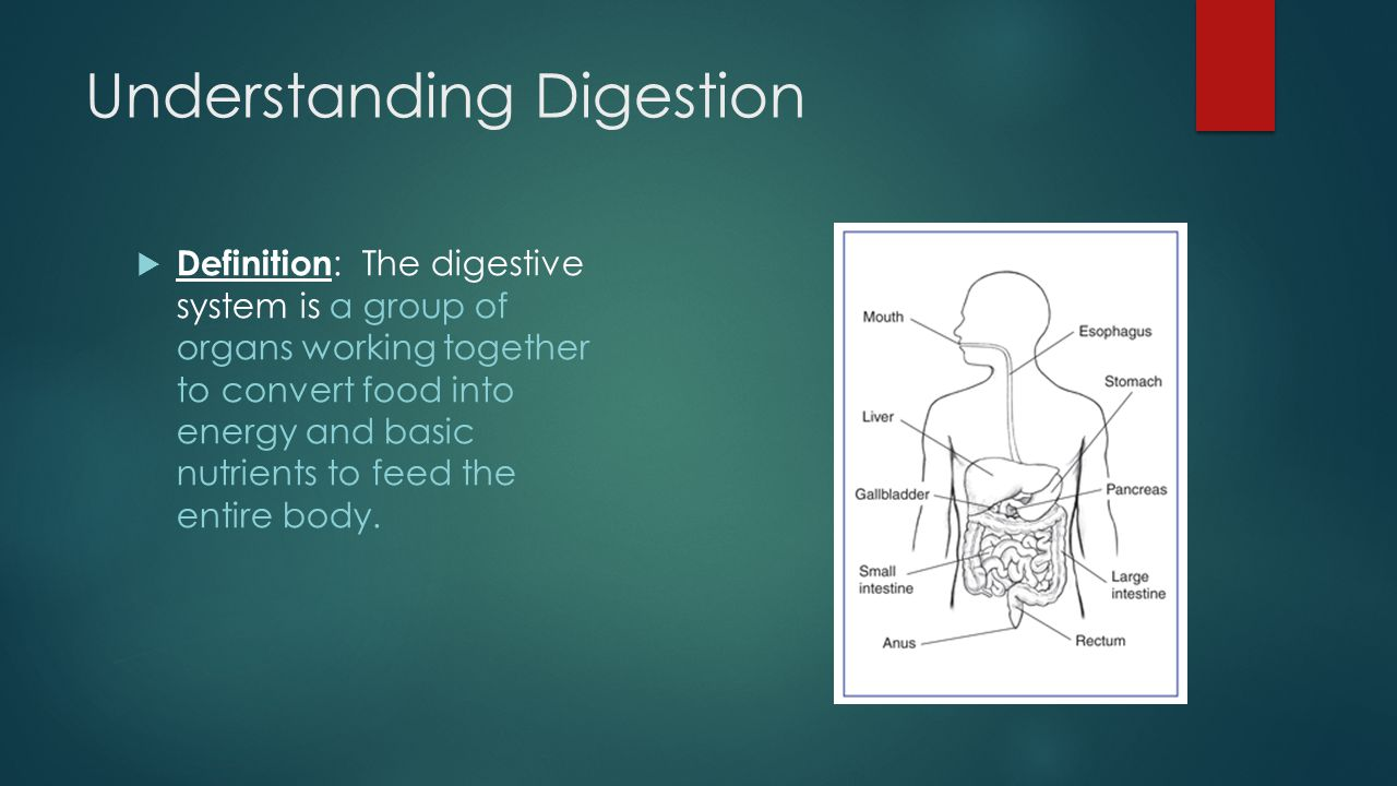 unit 7 – nutrition the digestive system. discussion…  what do, Human Body