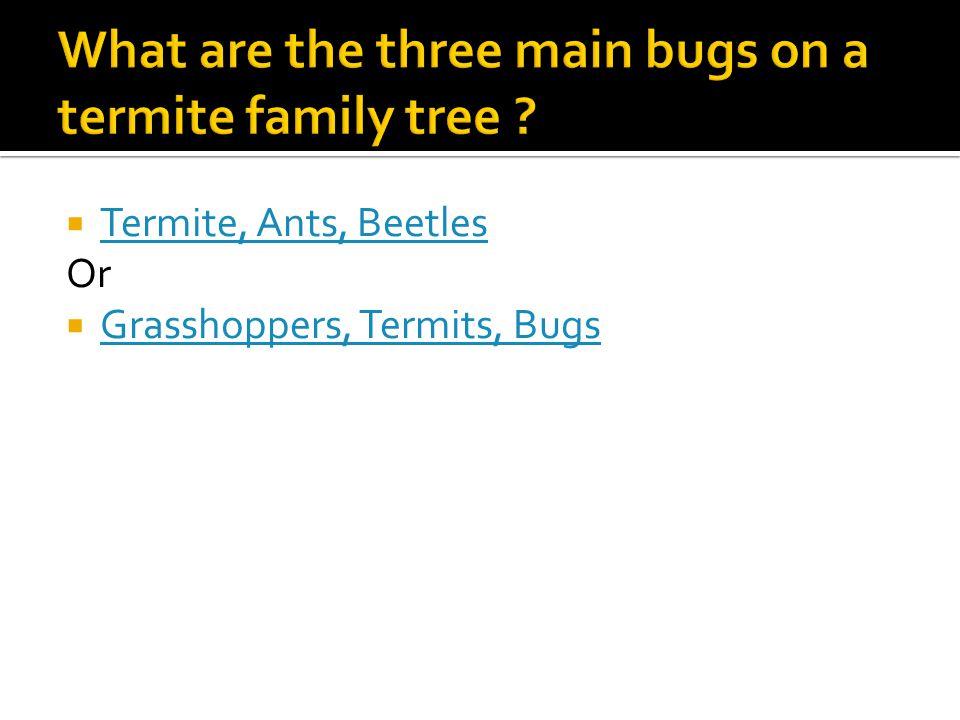  Termite, Ants, Beetles Termite, Ants, Beetles Or  Grasshoppers, Termits, Bugs Grasshoppers, Termits, Bugs