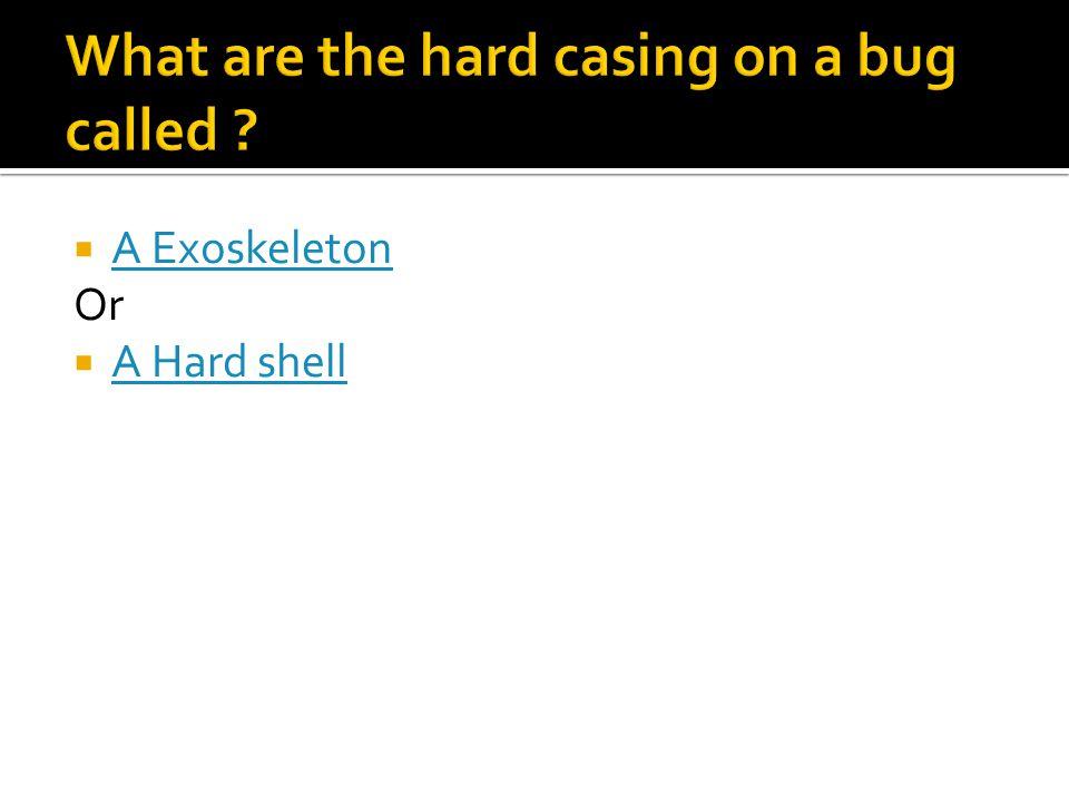  A Exoskeleton A Exoskeleton Or  A Hard shell A Hard shell