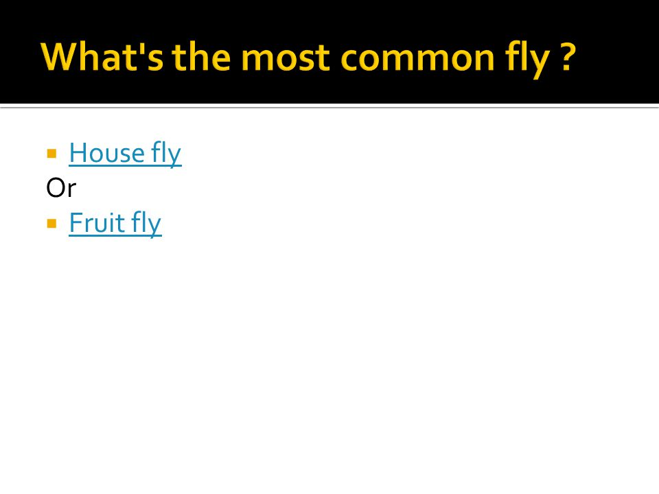  House fly House fly Or  Fruit fly Fruit fly