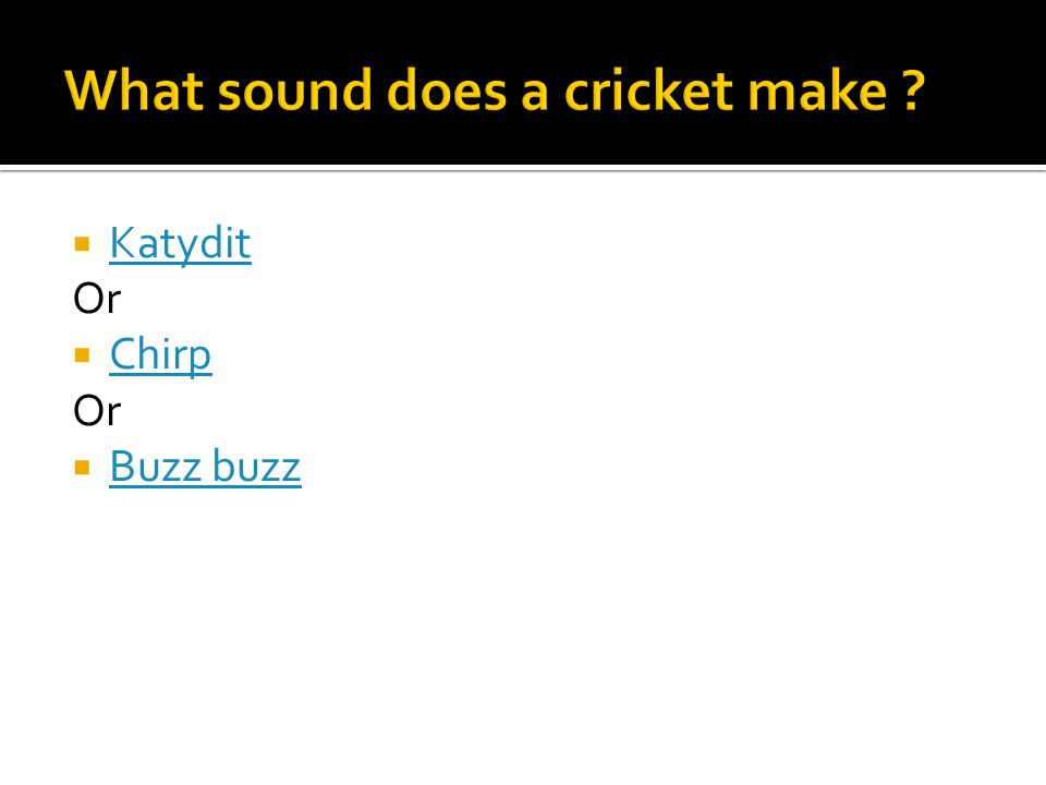  Katydit Katydit Or  Chirp Chirp Or  Buzz buzz Buzz buzz