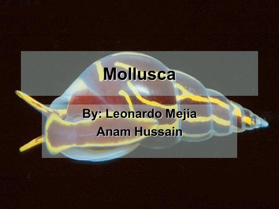 Mollusca By: Leonardo Mejia Anam Hussain
