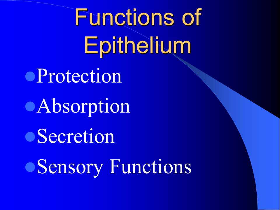 Functions of Epithelium Protection Absorption Secretion Sensory Functions