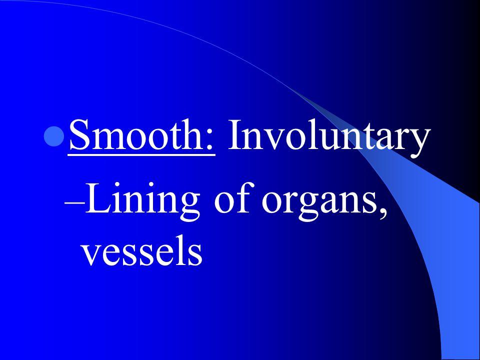 Smooth: Involuntary – Lining of organs, vessels
