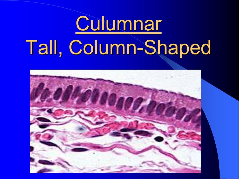 Culumnar Tall, Column-Shaped