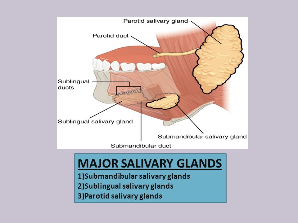 MAJOR SALIVARY GLANDS 1)Submandibular salivary glands 2)Sublingual salivary glands 3)Parotid salivary glands