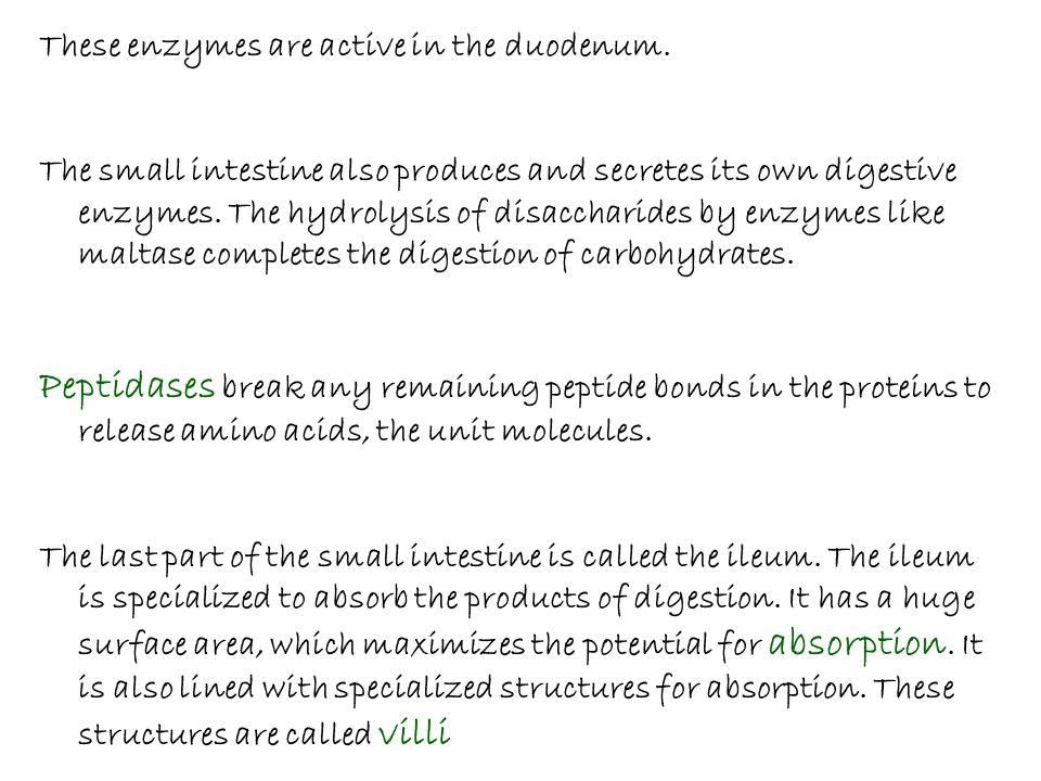 These enzymes are active in the duodenum. The small intestine also produces and secretes its own digestive enzymes. The hydrolysis of disaccharides by