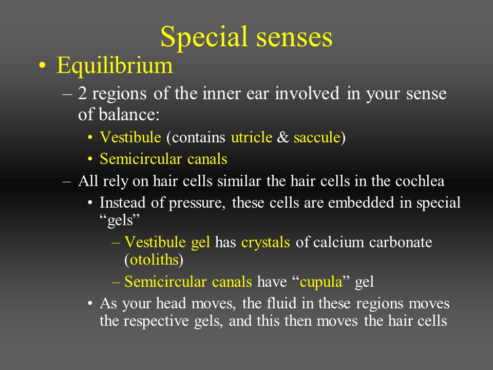 Special senses Equilibrium –2 regions of the inner ear involved in your sense of balance: Vestibule (contains utricle & saccule) Semicircular canals –