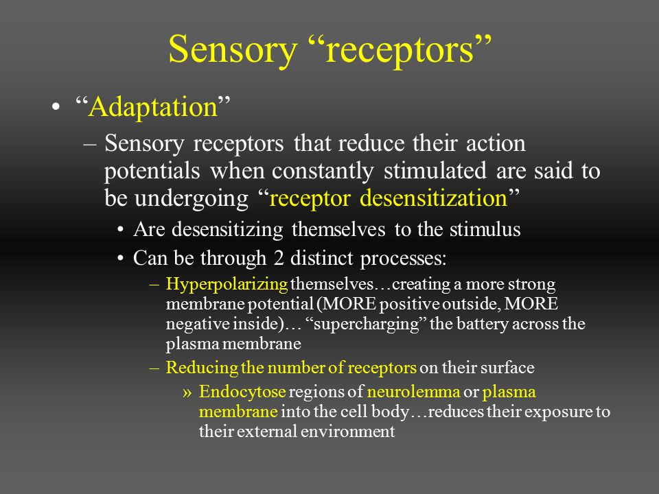 Special senses Olfaction: smell –Like taste, uses special chemoreceptors –In nasal cavity, retains these chemoreceptor neurons within a specialized sensory structure Nasal cavity is shaped to swirl incoming air up against the top of your nasal sinus Chemoreceptor cells placed at the top of the nasal sinus will detect chemicals in the air Deliver neural impulses to brain