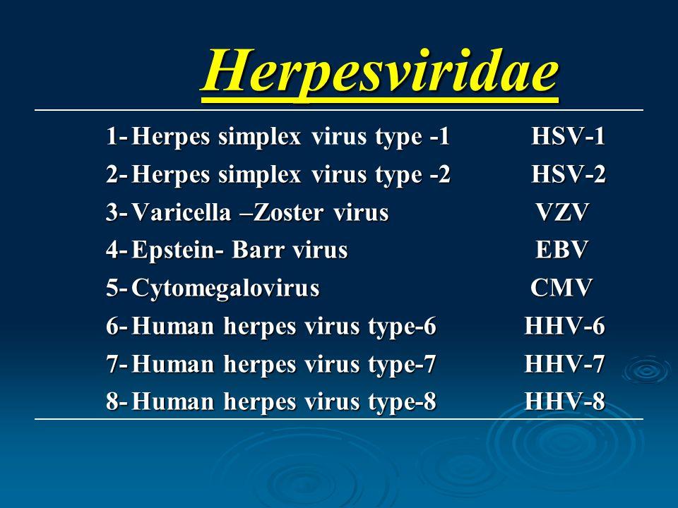 Herpesviridae 1-Herpes simplex type -1 HSV-1 1-Herpes simplex virus type -1 HSV-1 2-Herpes simplex virus type -2 HSV-2 3-Varicella –Zoster virus VZV 4-Epstein- Barr virus EBV 5-Cytomegalovirus CMV 6-Human herpes virus type-6 HHV-6 7-Human herpes virus type-7 HHV-7 8-Human herpes virus type-8 HHV-8