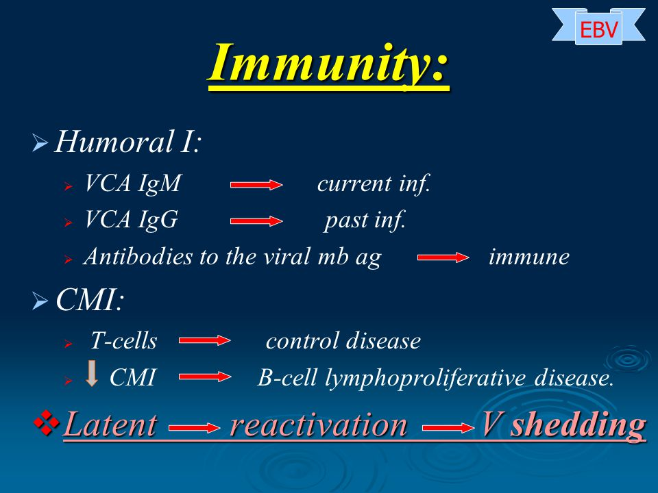Immunity:   Humoral I:   VCA IgM current inf.   VCA IgG past inf.