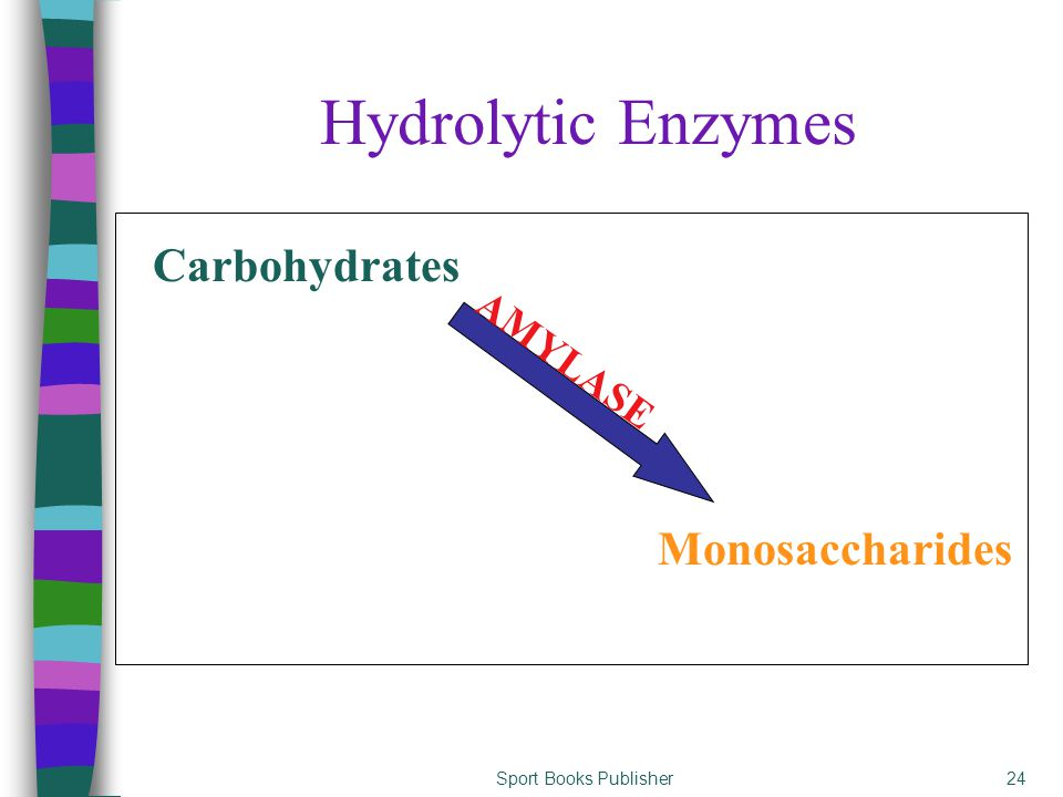 Sport Books Publisher24 Hydrolytic Enzymes Monosaccharides Carbohydrates AMYLASE