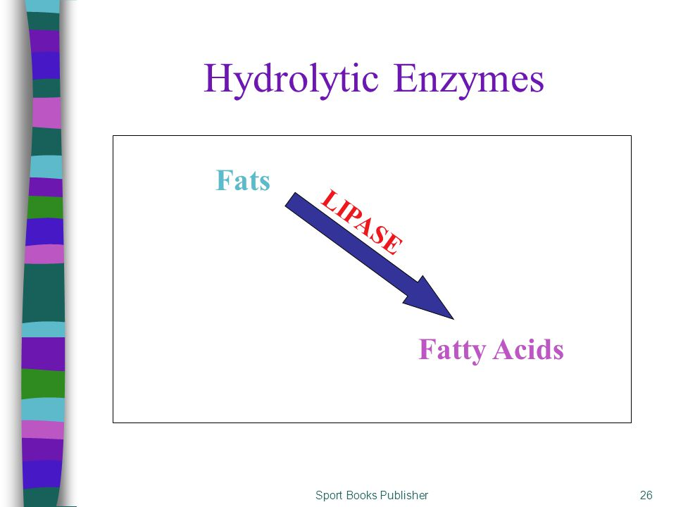 Sport Books Publisher26 Hydrolytic Enzymes Fatty Acids Fats LIPASE