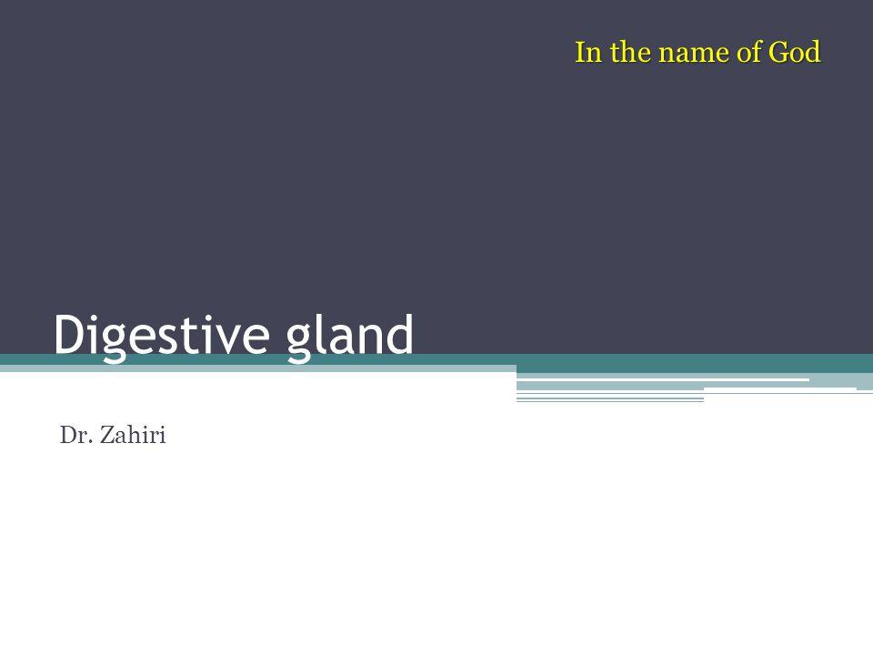 Digestive gland Dr. Zahiri In the name of God